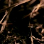 10 temas, 10 cortometrajes; la experiencia audiovisual definitiva de Bon Iver