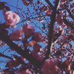 [Crítica] Teen Daze – Themes for Dying Earth